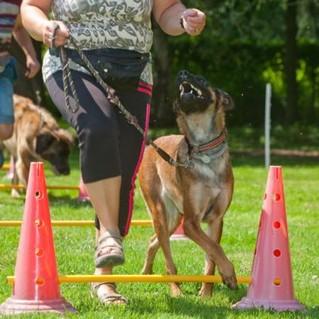 Hundeschule – Training partnerschaftlich & teambildent