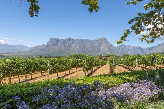 Südafrika - Weinseminar im Weinheuer