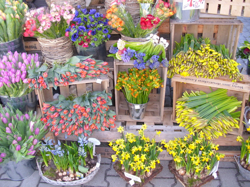 Pflanzen Großhandel Online